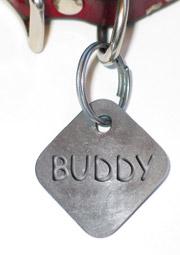 dog collar with tag and Buddy name