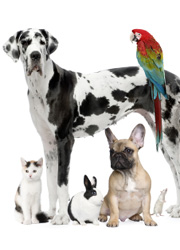 cat, dogs, rabbit, parrot and mouse