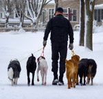 man walking six dogs