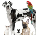 cat dogs rabbit mouse parrot