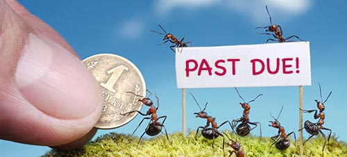 ants with payment notice