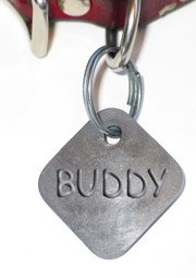 dog collar with tag and Buddy name