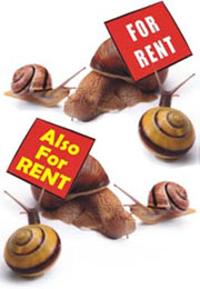 snail shells for rent