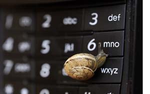 snail on telephone